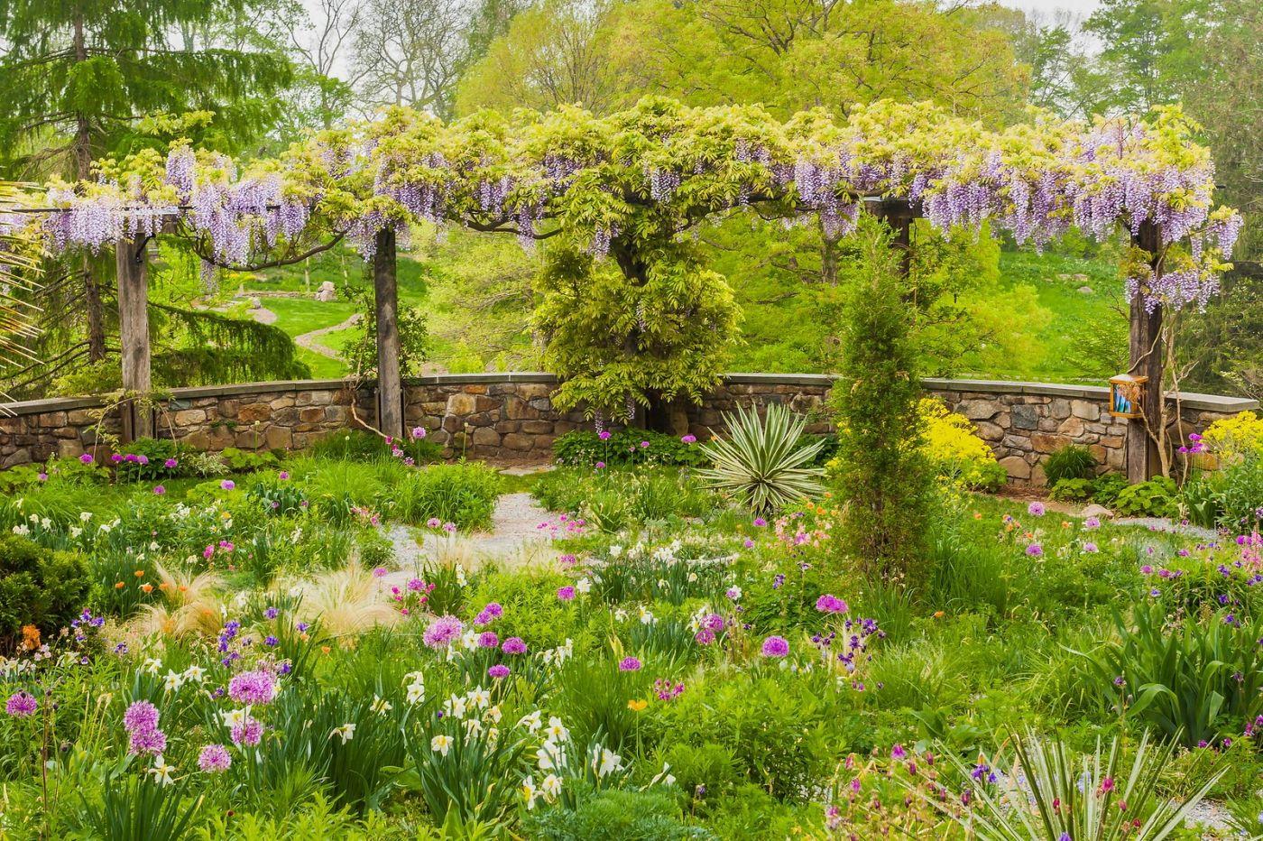 Chanticleer花园,那年盛开的紫藤花_图1-30