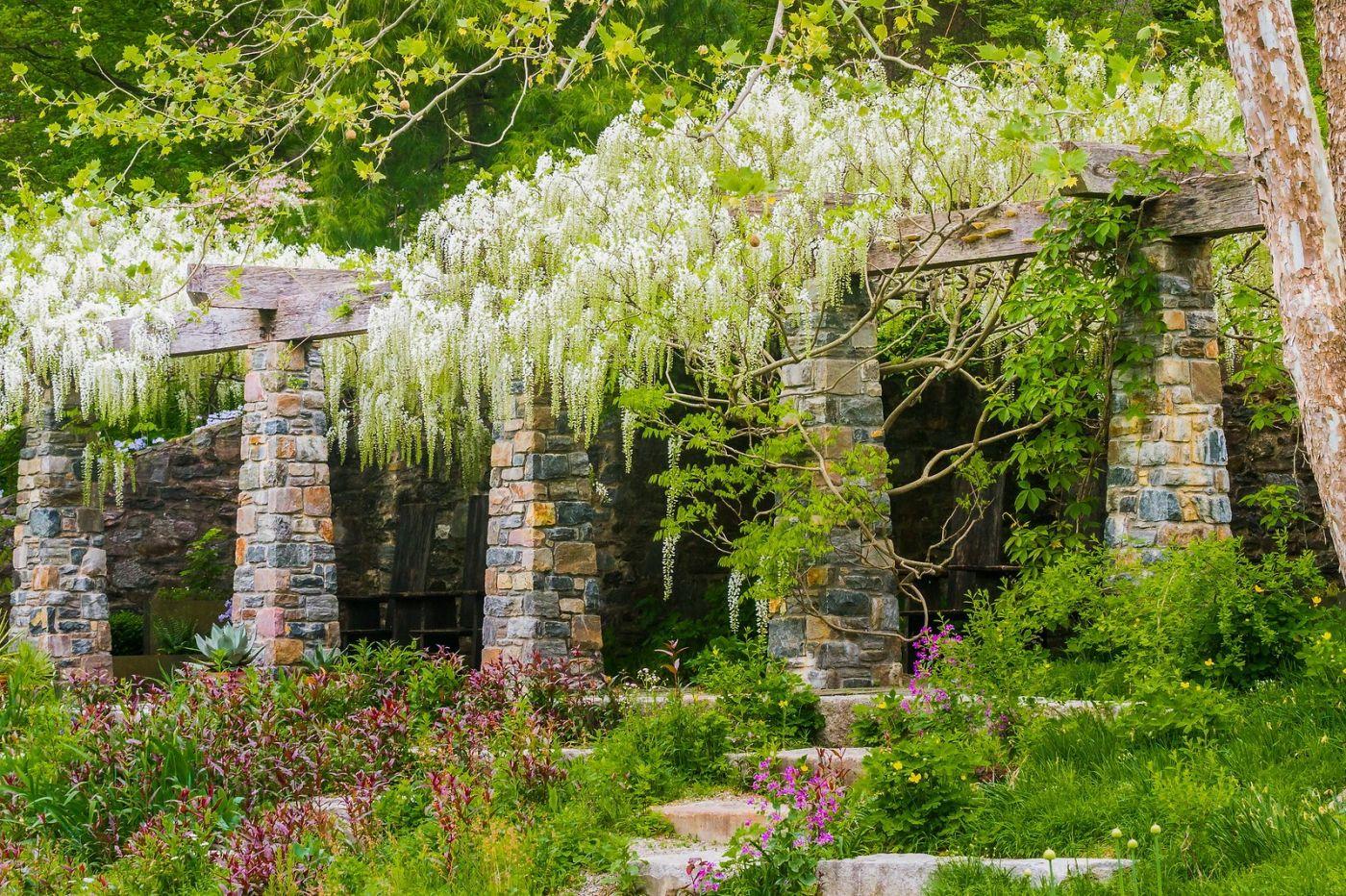 Chanticleer花园,那年盛开的紫藤花_图1-29
