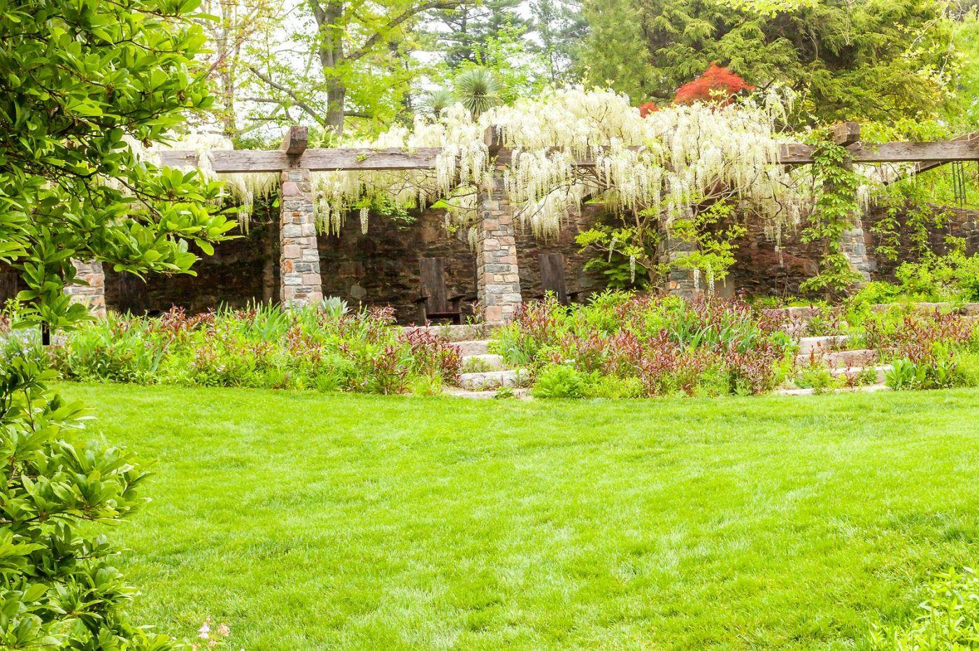 Chanticleer花园,那年盛开的紫藤花_图1-35