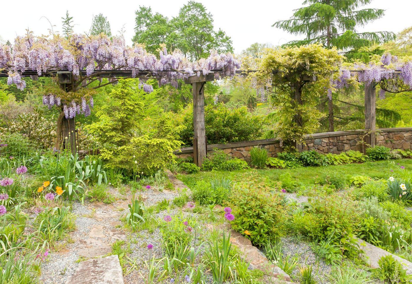 Chanticleer花园,那年盛开的紫藤花_图1-40