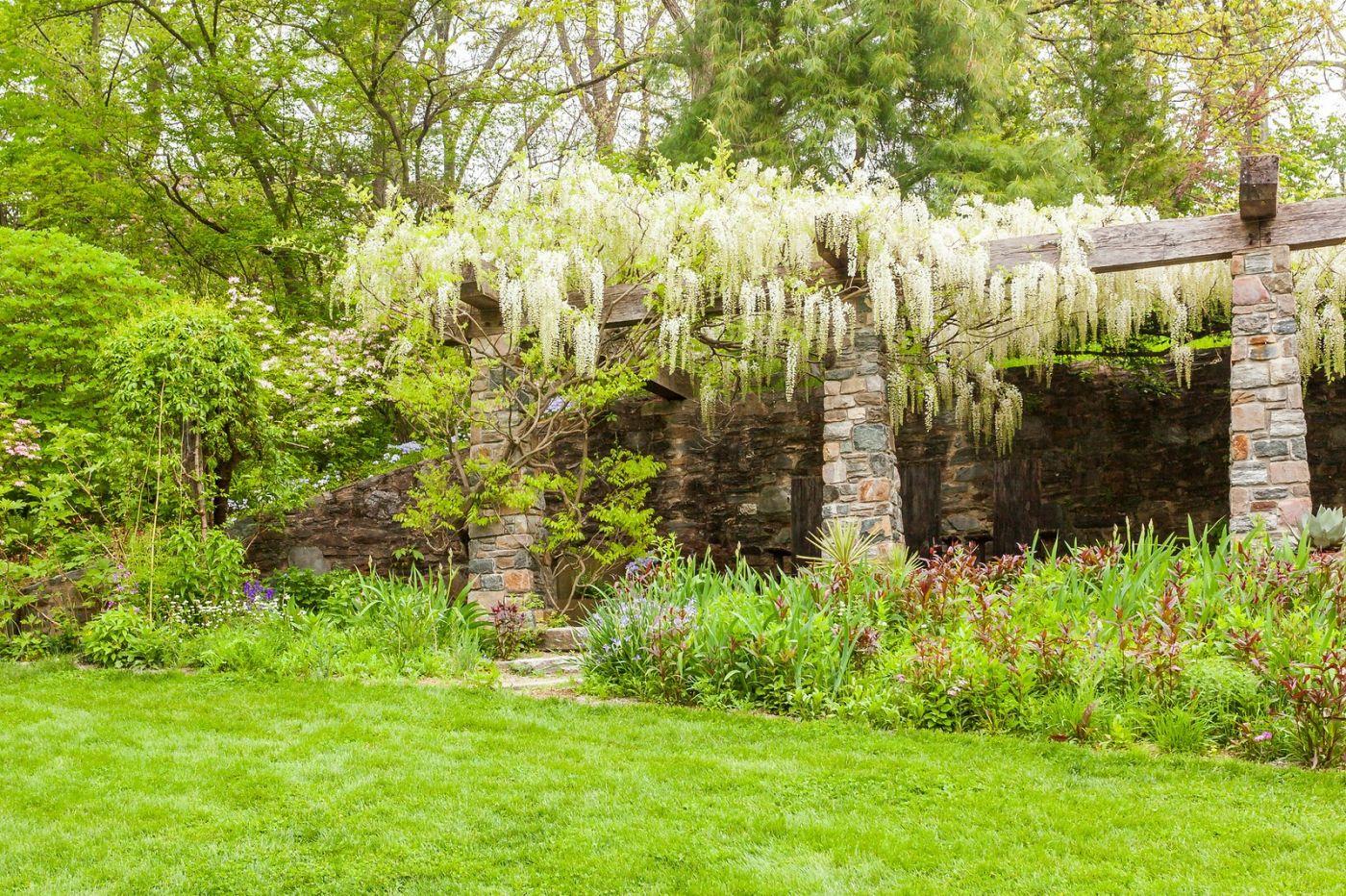 Chanticleer花园,那年盛开的紫藤花_图1-37