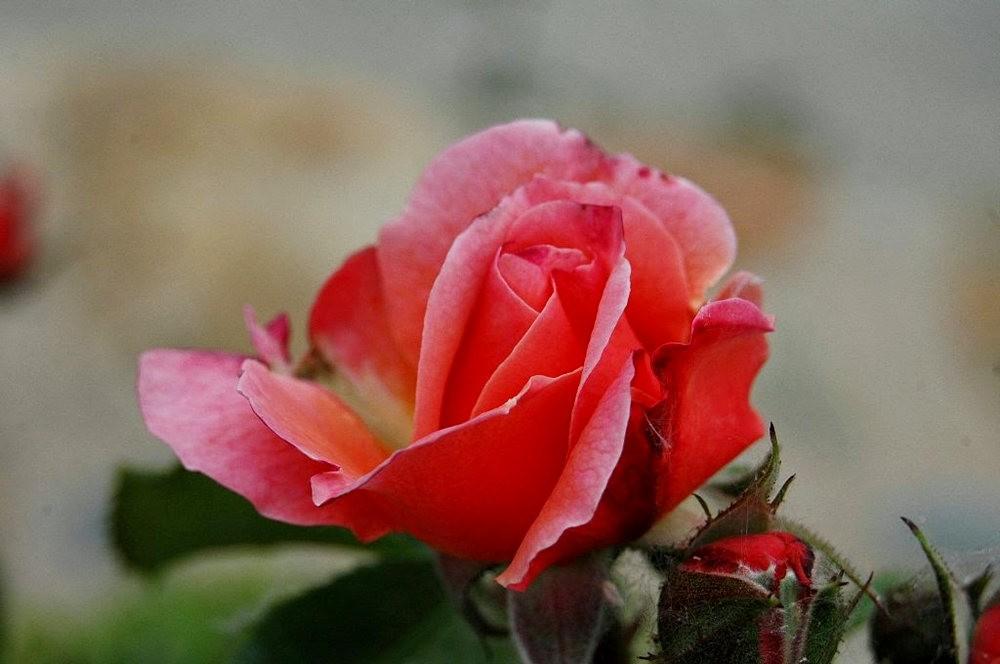 格拉纳达的阿尔罕布拉宫_图1-16