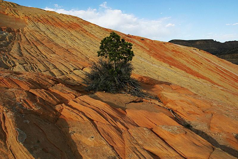 棉花木峡谷之------红岩,白岩与黄岩_图1-25