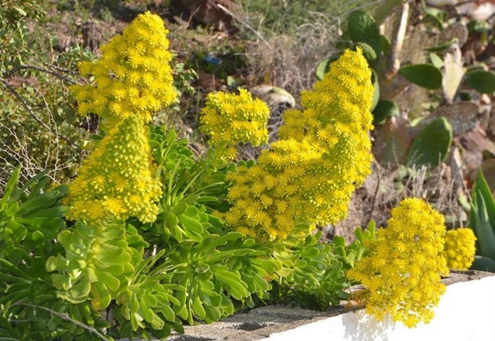 黄色的花朵_图1-3