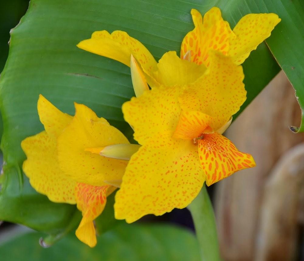 黄色的花朵_图1-4