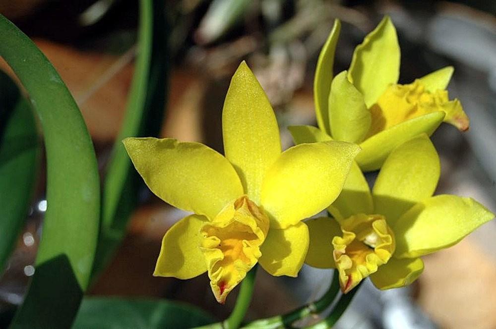 黄色的花朵_图1-5