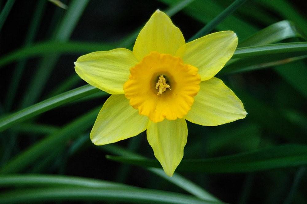 黄色的花朵_图1-6