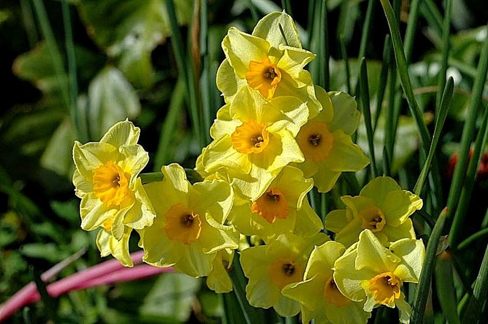 黄色的花朵_图1-7