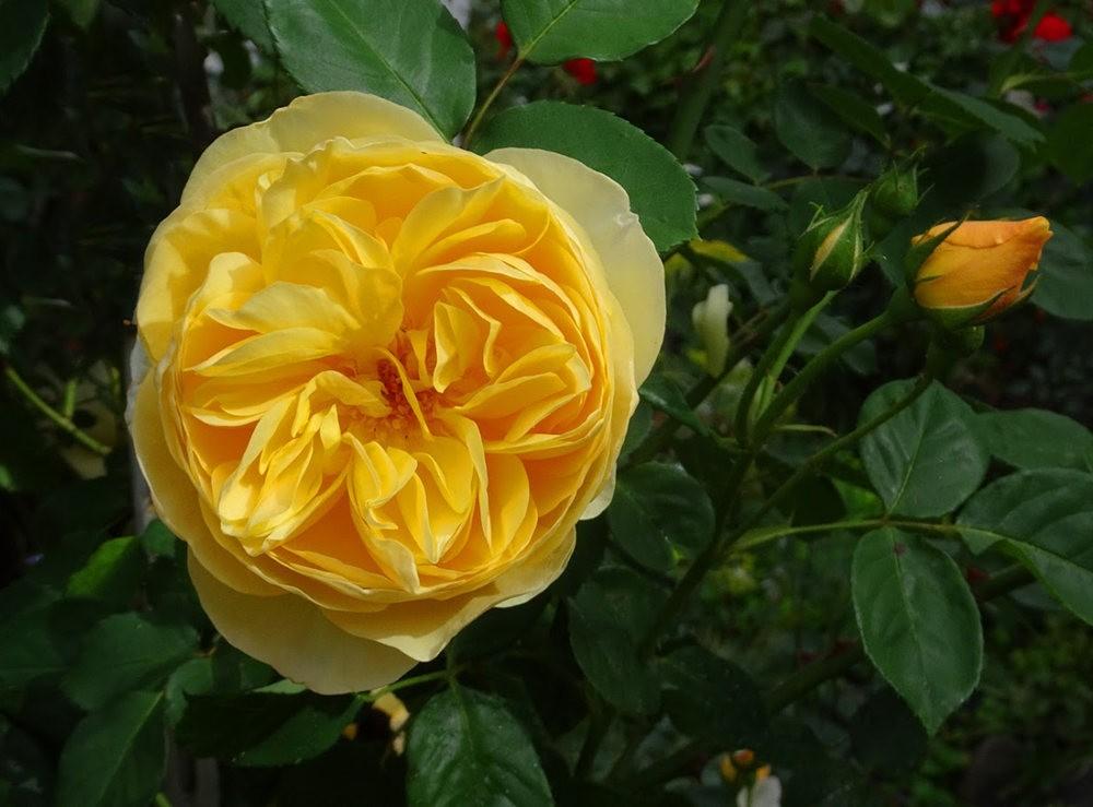 黄色的花朵_图1-10