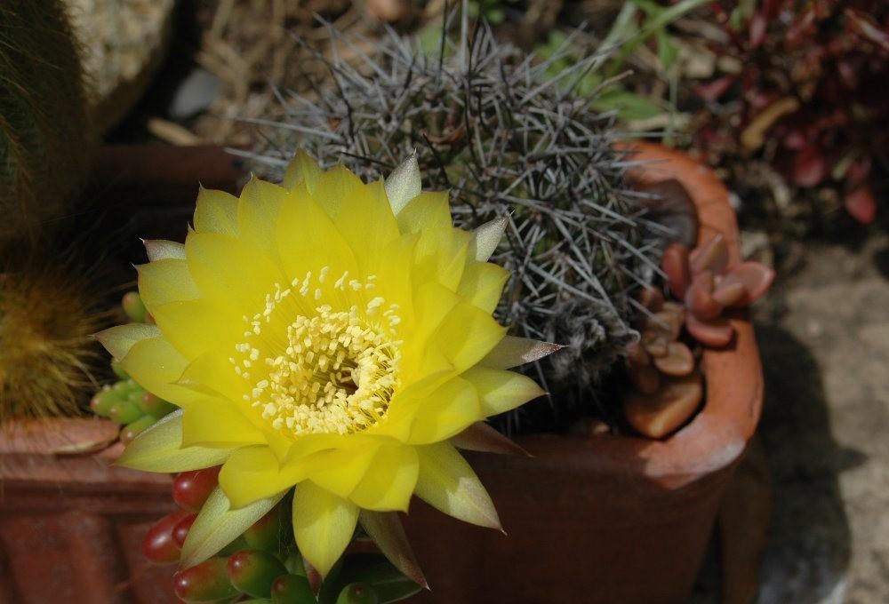 黄色的花朵_图1-12