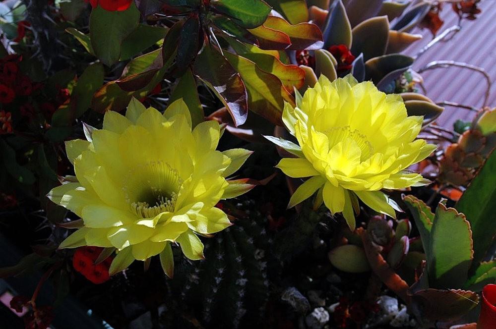 黄色的花朵_图1-13