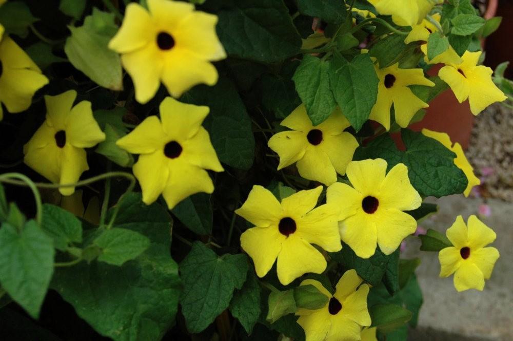 黄色的花朵_图1-15