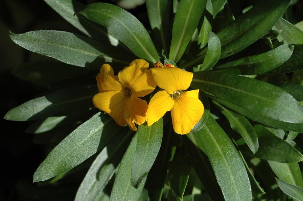 黄色的花朵_图1-16