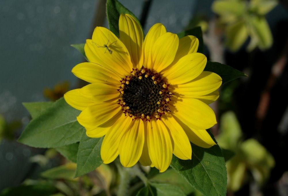 黄色的花朵_图1-17