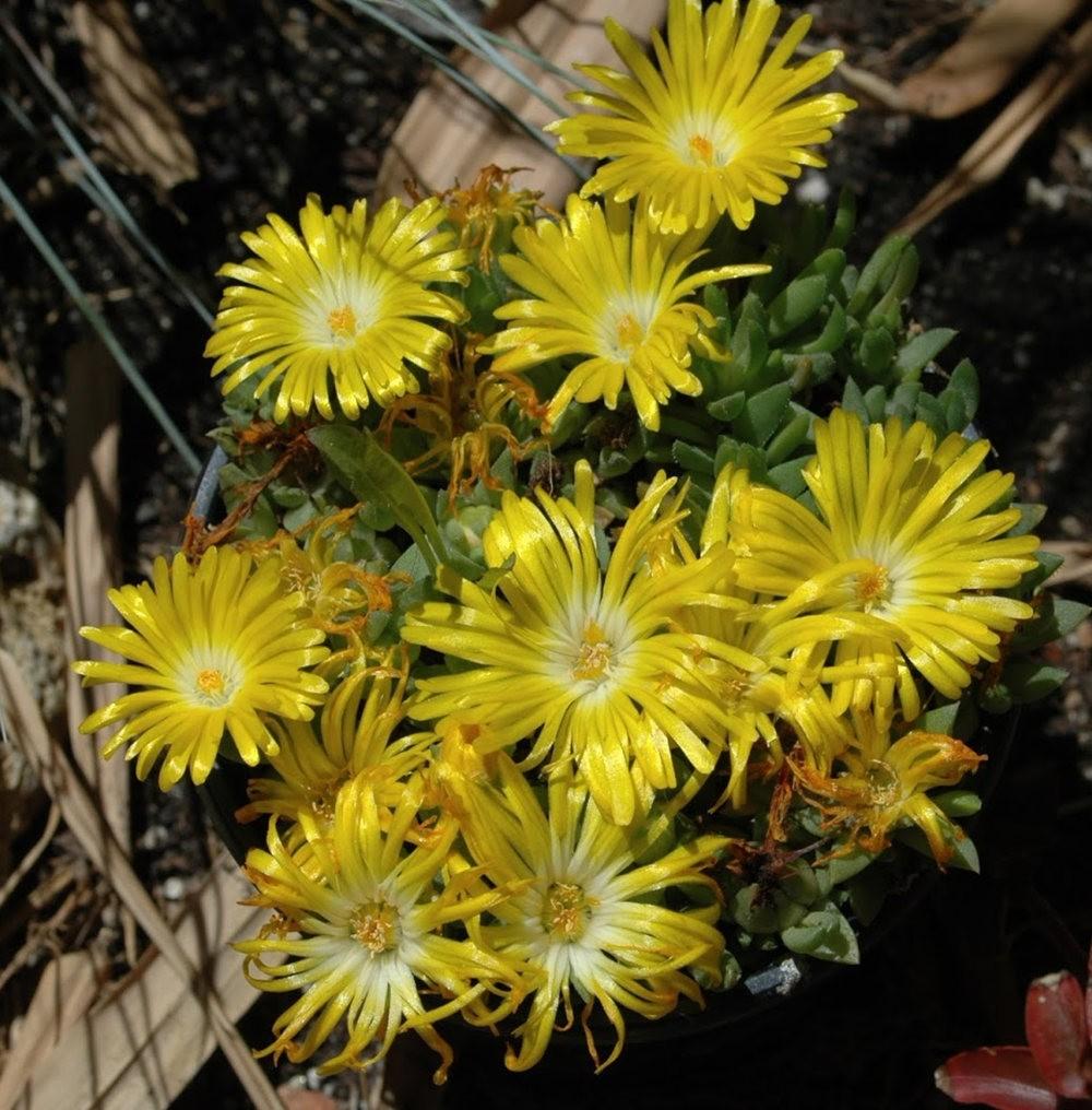 黄色的花朵_图1-18