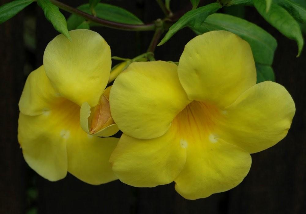 黄色的花朵_图1-21