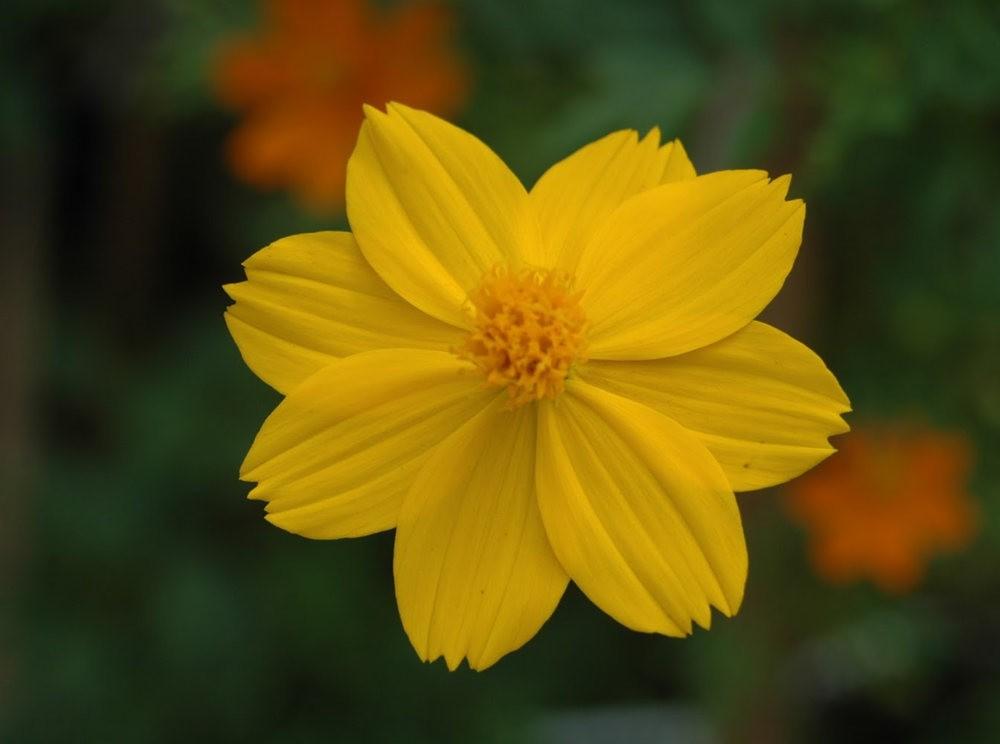 黄色的花朵_图1-23
