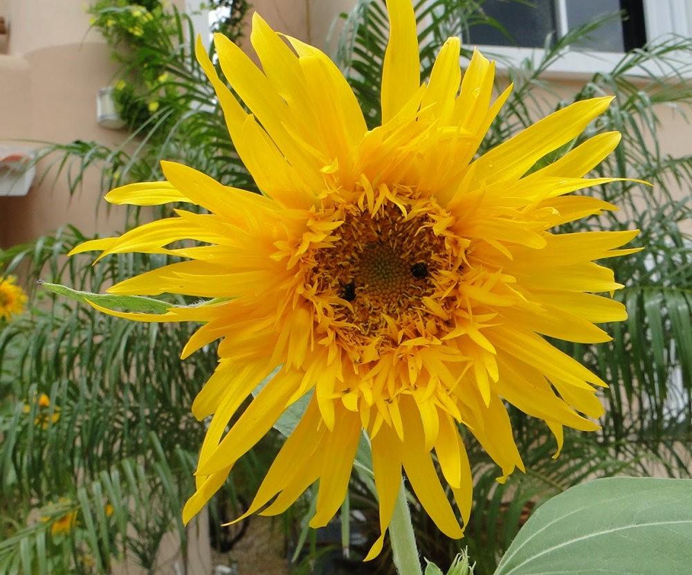 黄色的花朵_图1-24