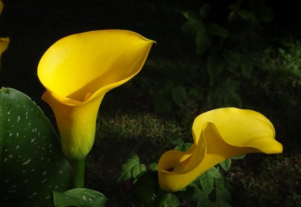 黄色的花朵_图1-25