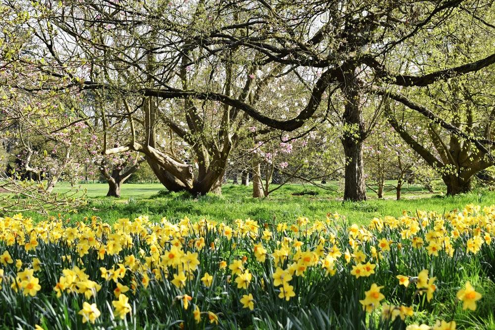 4月 伦敦的木兰树_图1-22