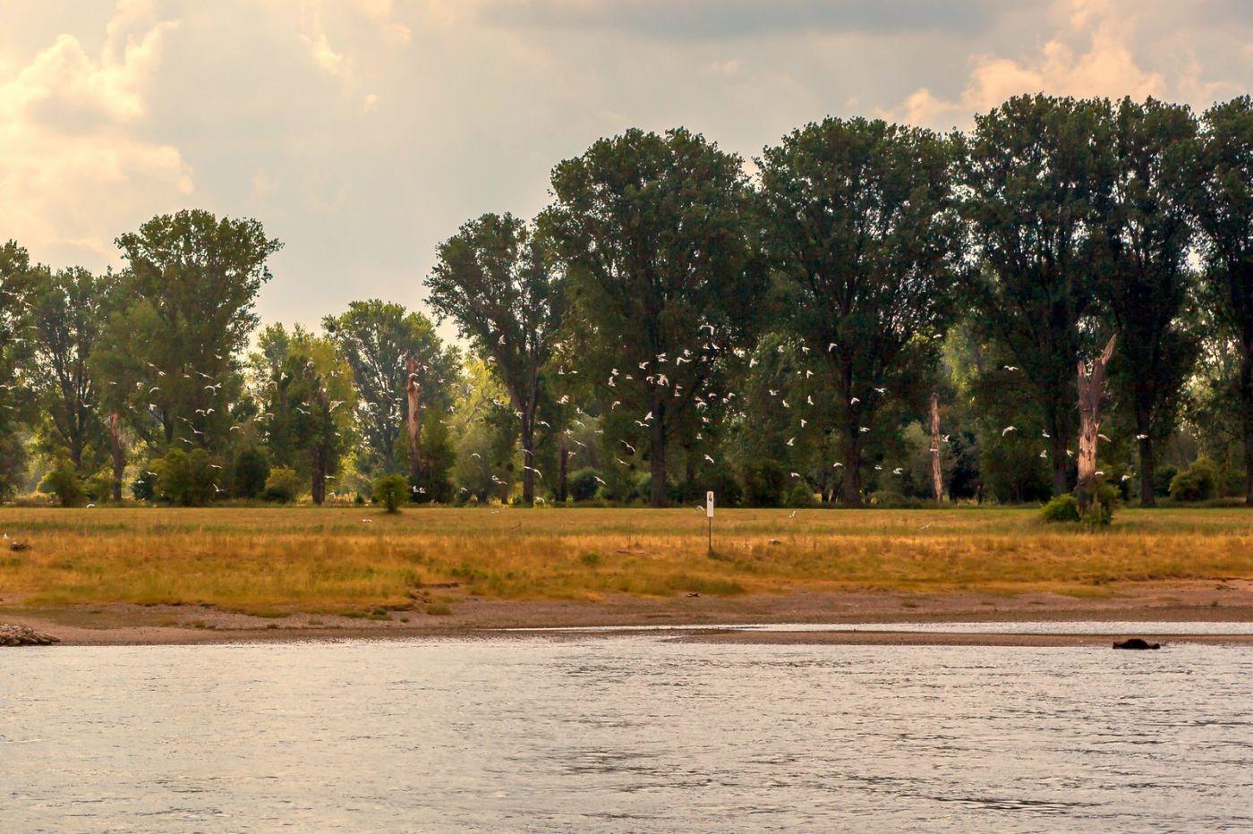 畅游莱茵河,两岸即景_图1-8