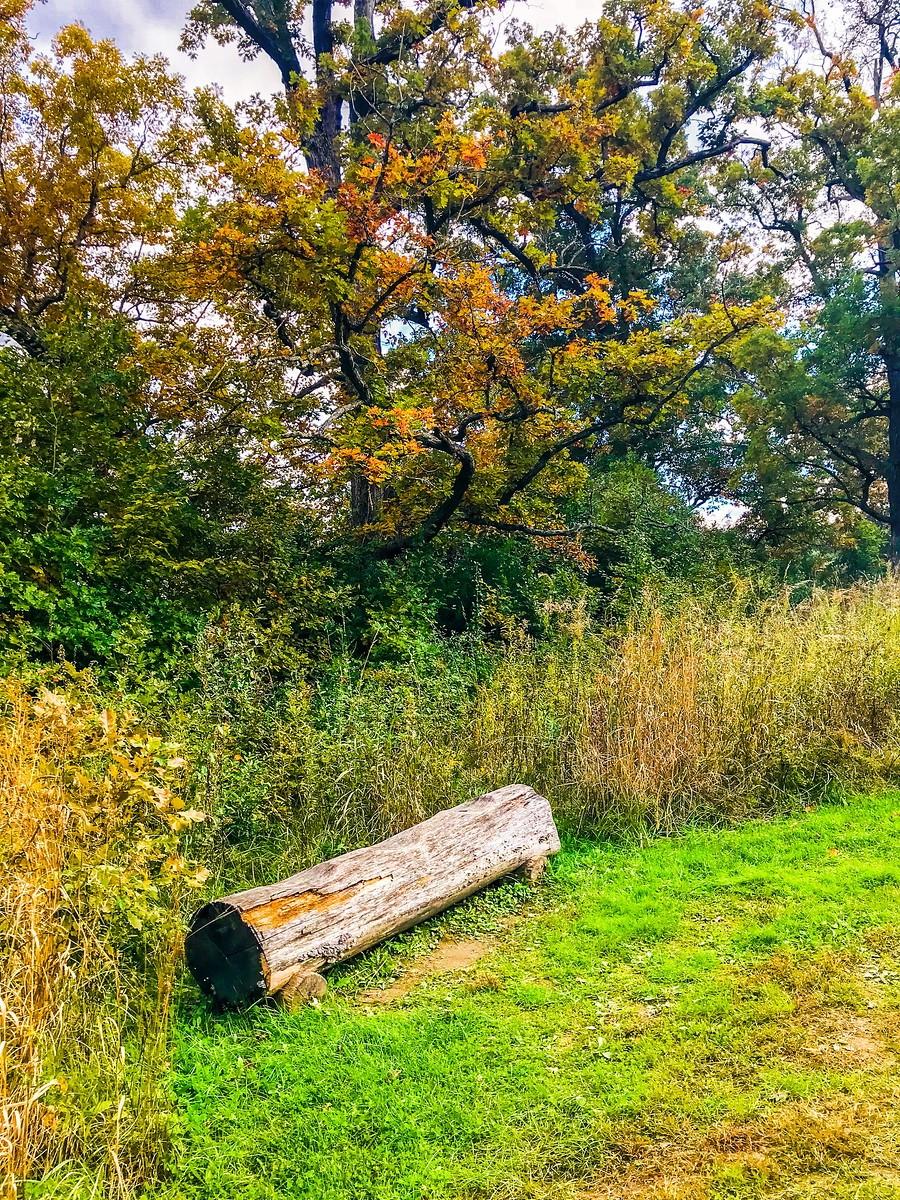 宾州长木公园,景色处处有_图1-39