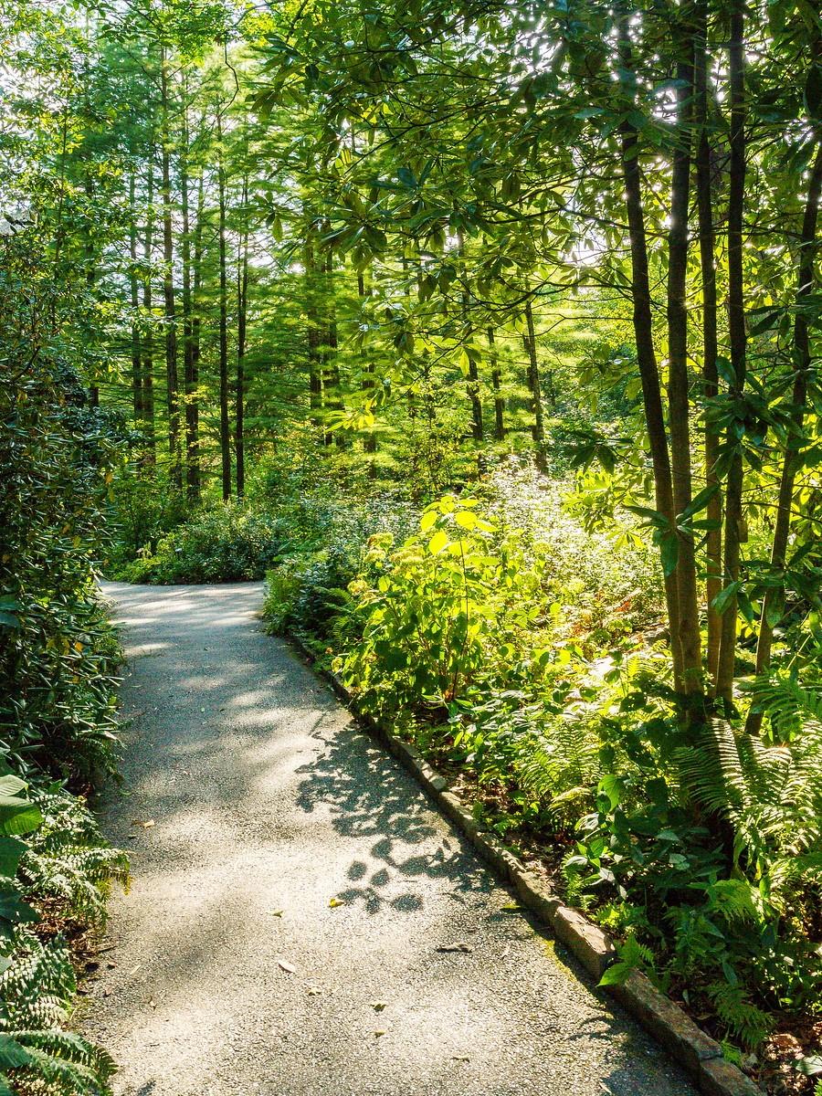 宾州长木公园,景色处处有_图1-25