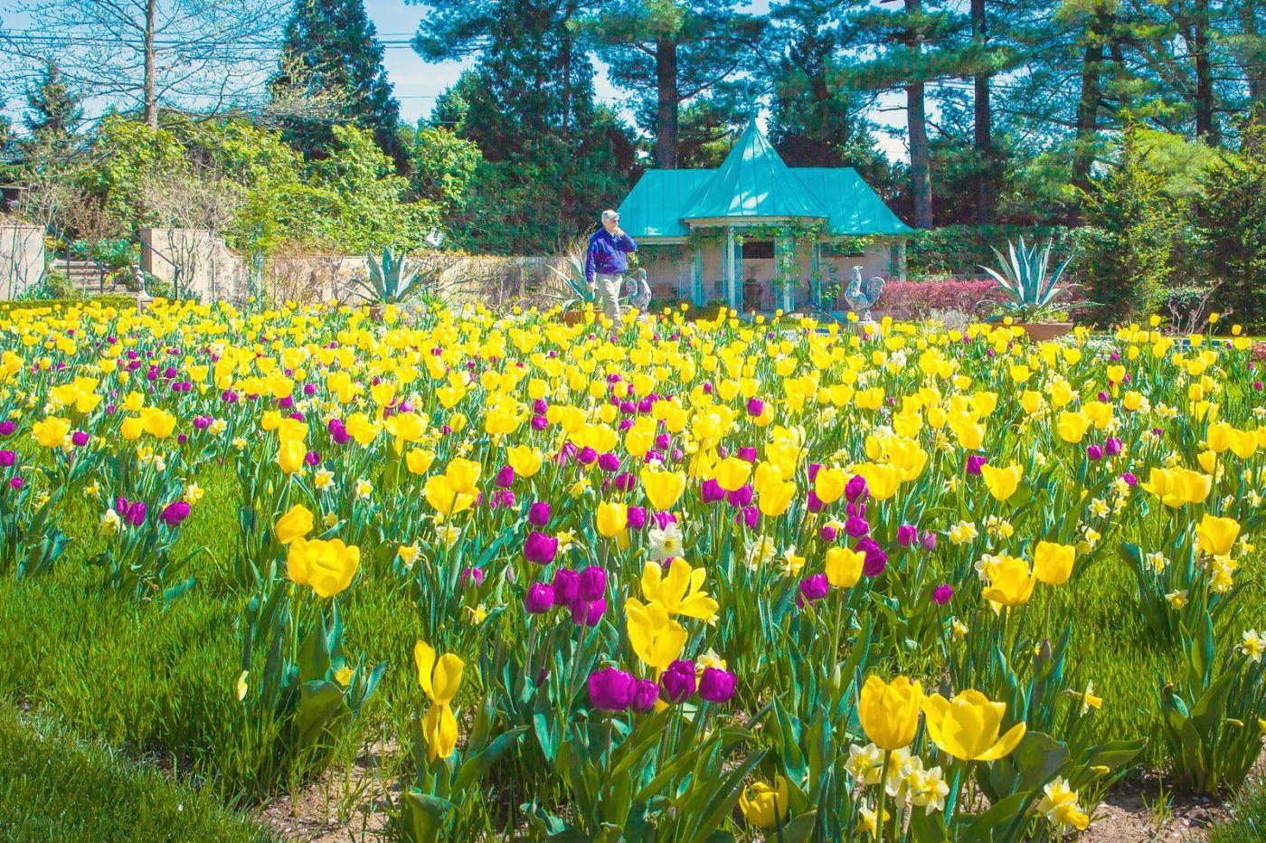 Chanticleer花园,花房泳池_图1-24