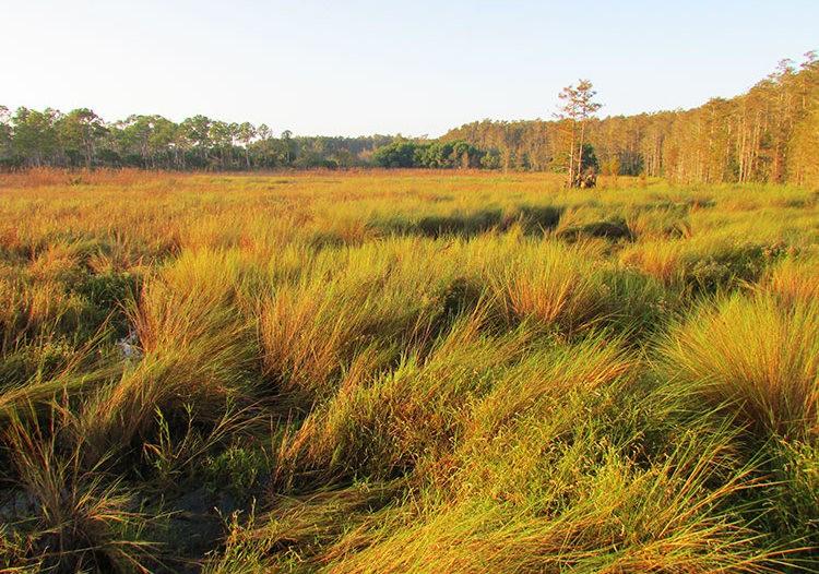 佛罗里达沼泽地保护区_图1-5