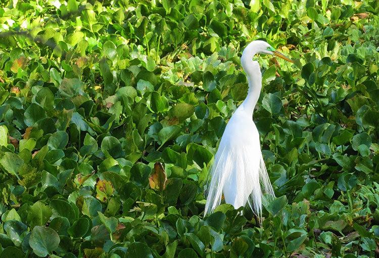 佛罗里达沼泽地保护区_图1-24