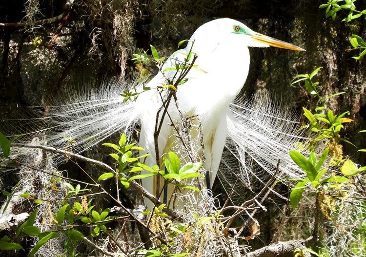 佛罗里达沼泽地保护区_图1-25