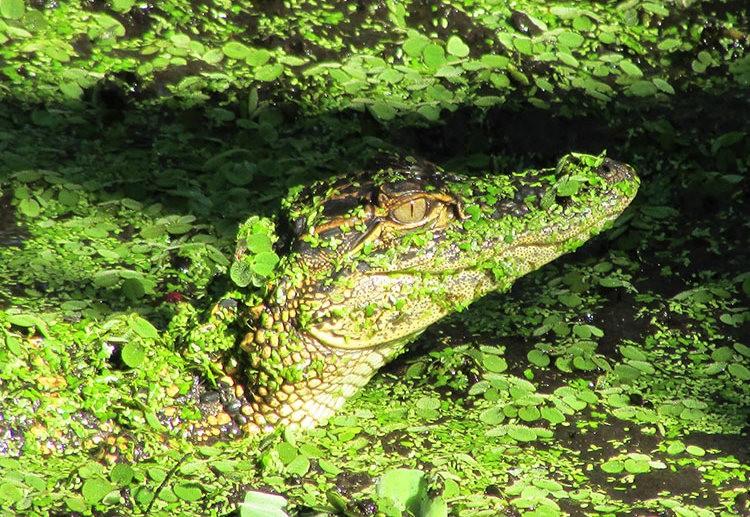 佛罗里达沼泽地保护区_图1-28