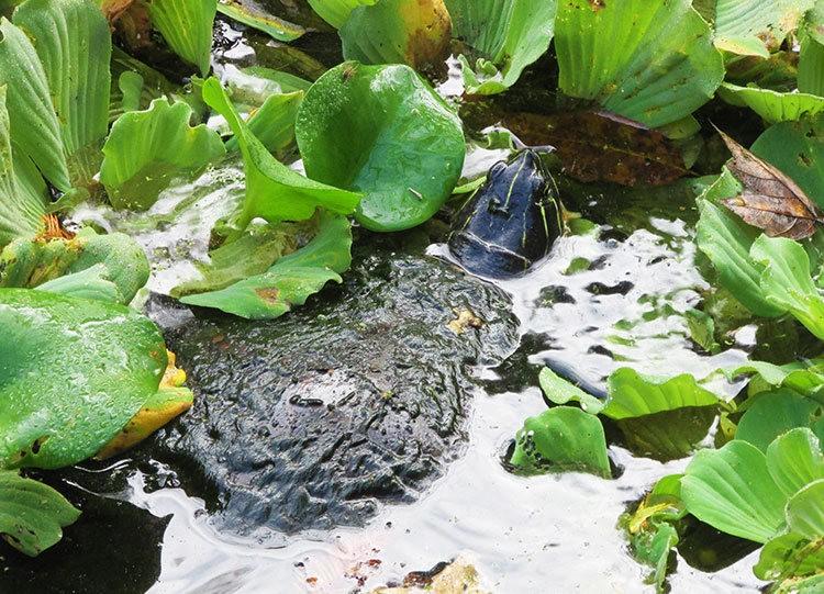 佛罗里达沼泽地保护区_图1-29