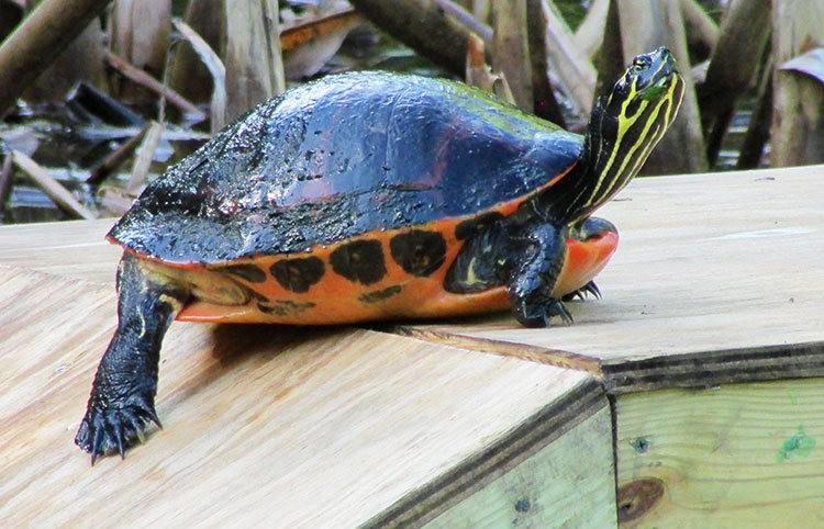 佛罗里达沼泽地保护区_图1-30