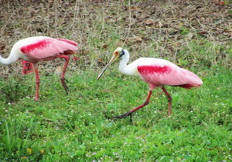 佛罗里达沼泽地保护区_图1-32