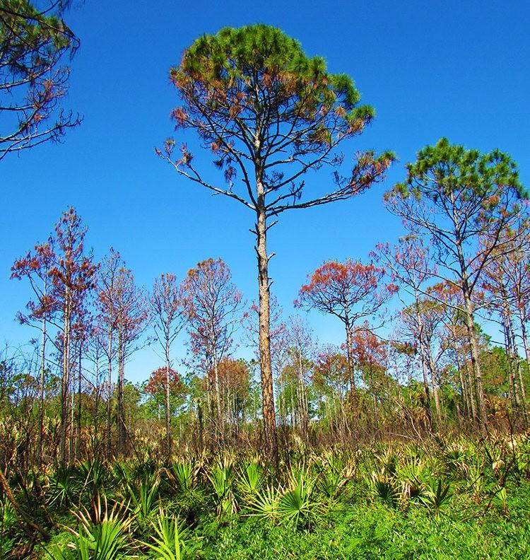佛罗里达沼泽地保护区_图1-33