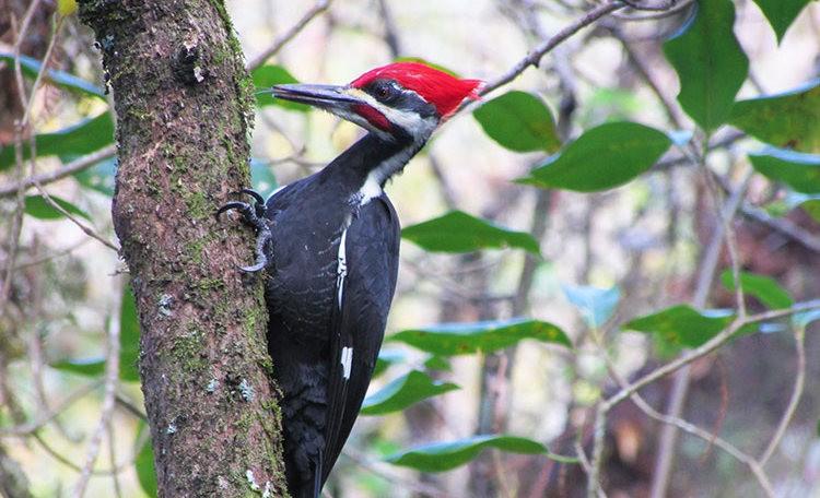 佛罗里达沼泽地保护区_图1-34