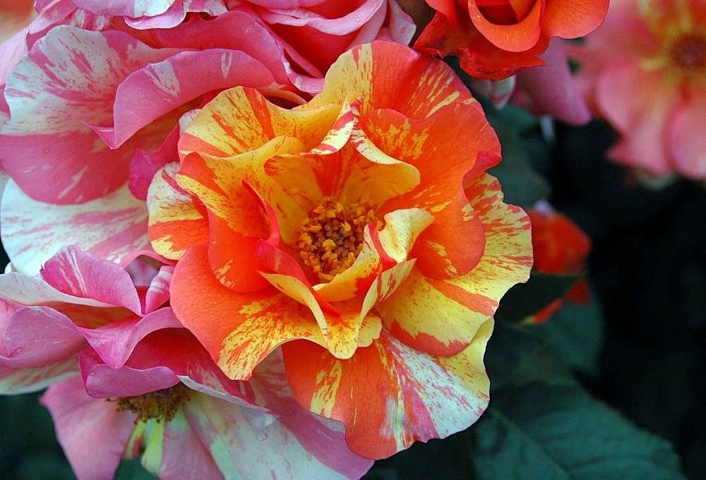 梦幻花园-----2_图1-17