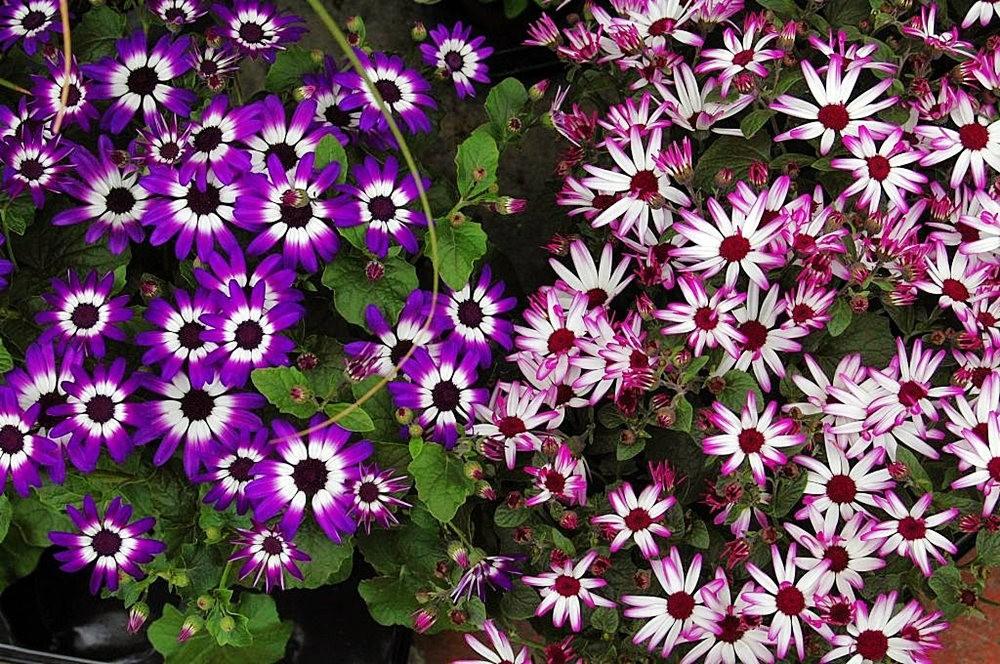 梦幻花园-----2_图1-23