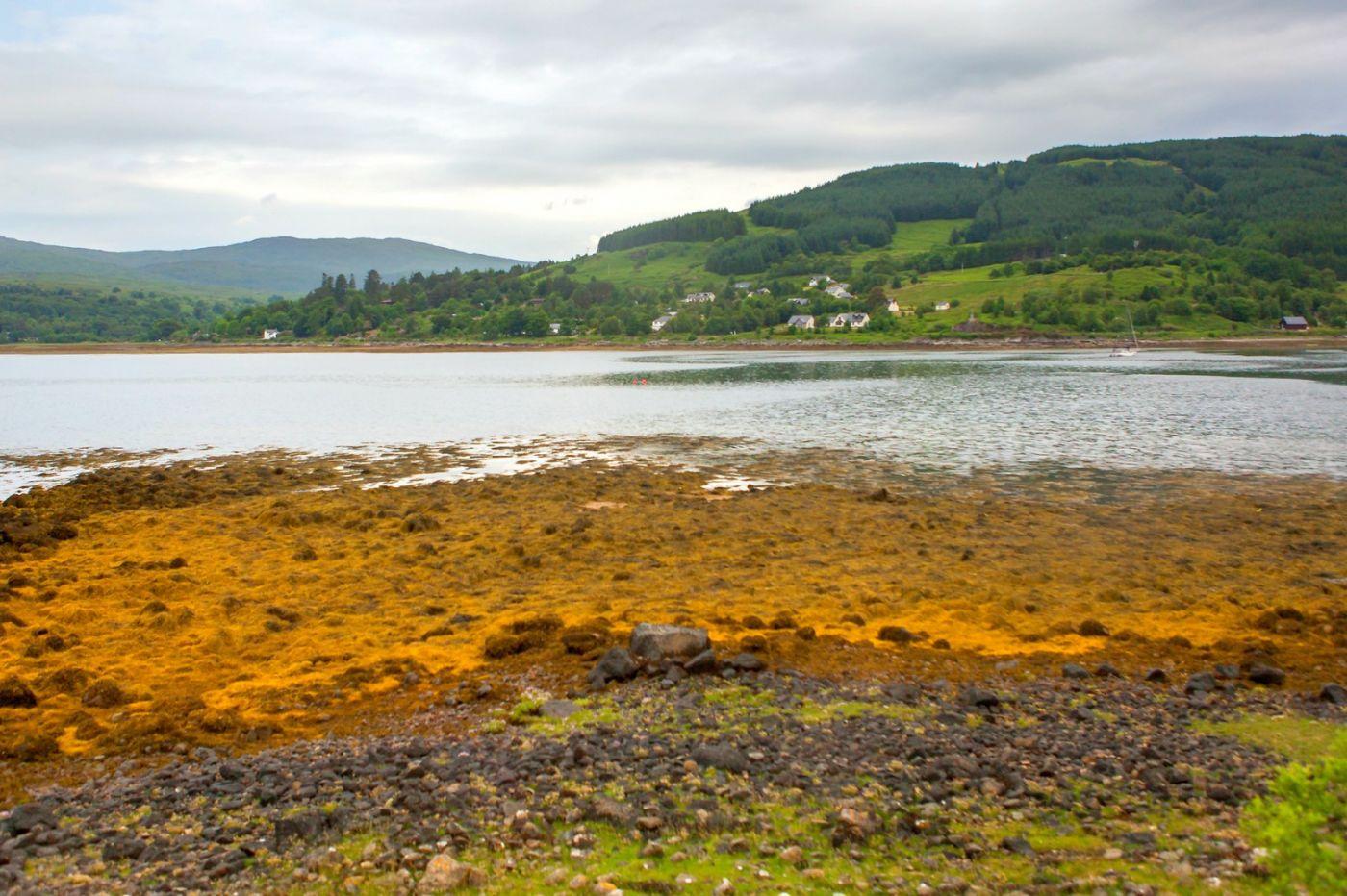 苏格兰美景,弯弯的沙滩_图1-16