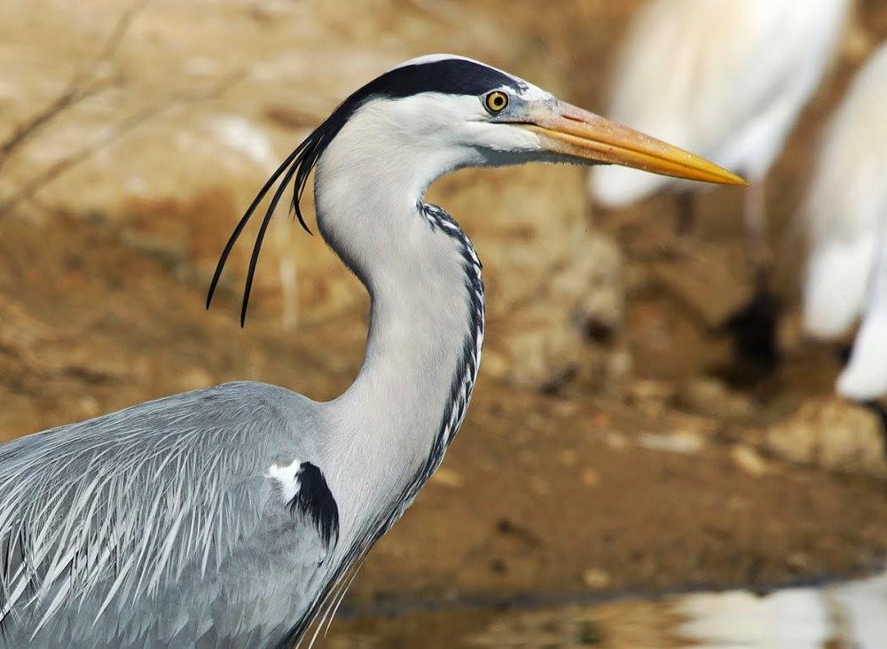 马丁斯雀鸟保护区-------苍鹭.戴胜鸟_图1-1