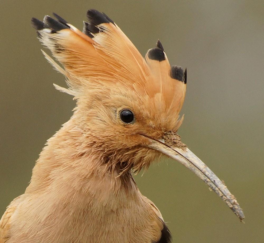 马丁斯雀鸟保护区-------苍鹭.戴胜鸟_图1-2