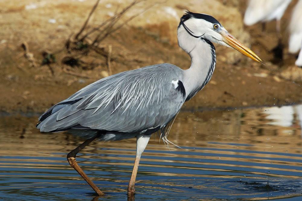 马丁斯雀鸟保护区-------苍鹭.戴胜鸟_图1-3