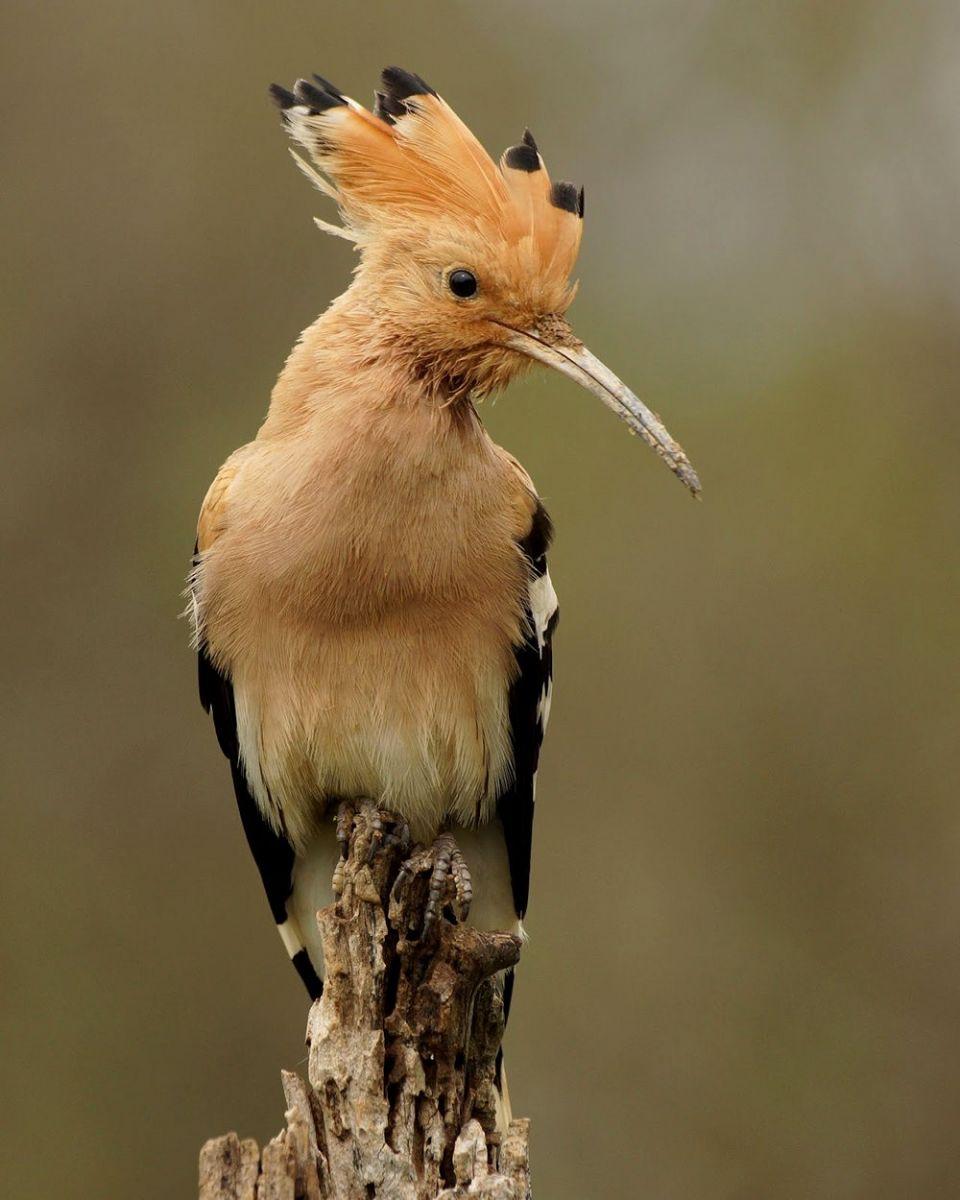 马丁斯雀鸟保护区-------苍鹭.戴胜鸟_图1-4
