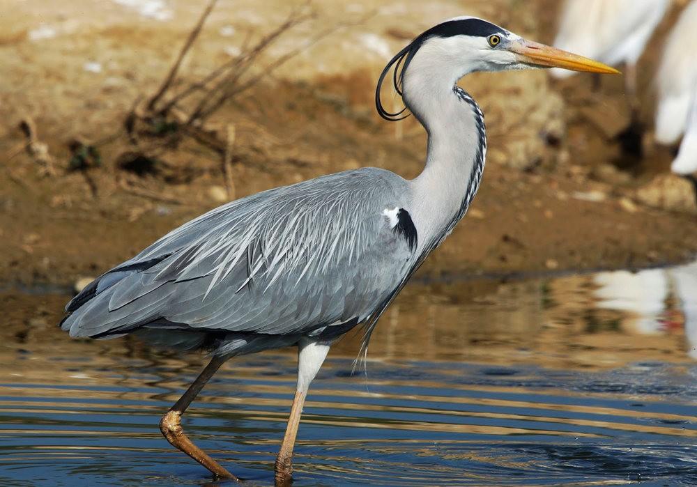 马丁斯雀鸟保护区-------苍鹭.戴胜鸟_图1-5