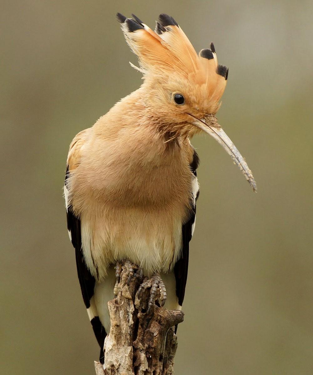 马丁斯雀鸟保护区-------苍鹭.戴胜鸟_图1-6