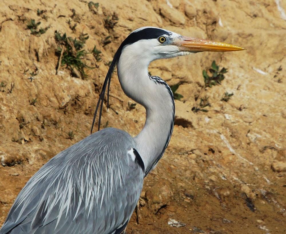 马丁斯雀鸟保护区-------苍鹭.戴胜鸟_图1-7