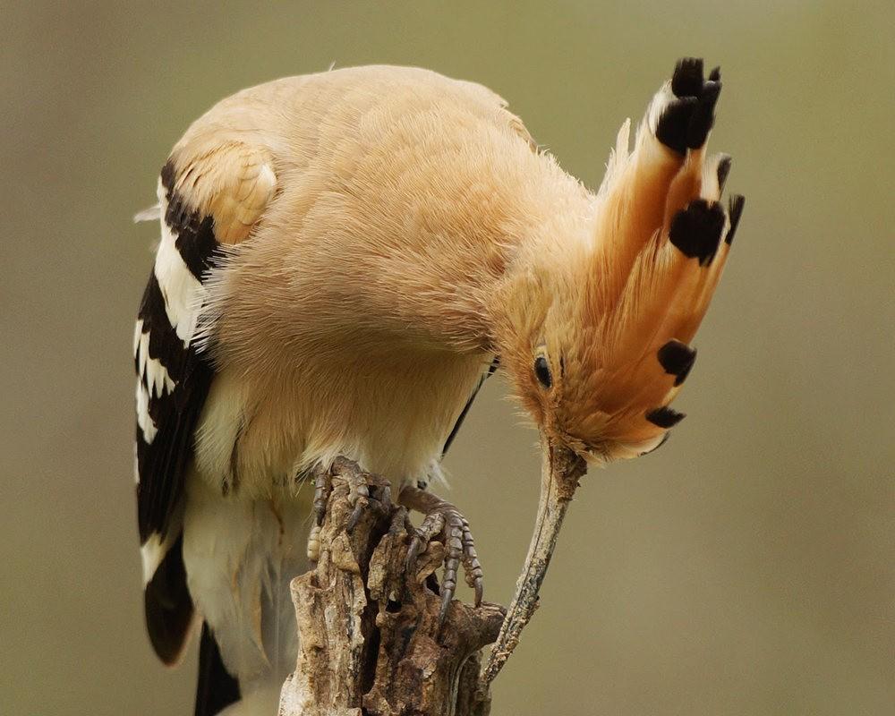 马丁斯雀鸟保护区-------苍鹭.戴胜鸟_图1-8