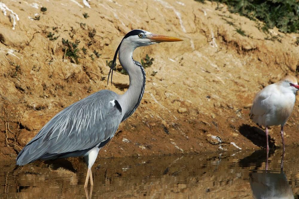 马丁斯雀鸟保护区-------苍鹭.戴胜鸟_图1-9