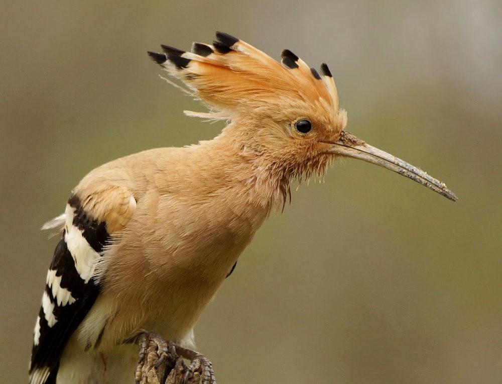 马丁斯雀鸟保护区-------苍鹭.戴胜鸟_图1-10